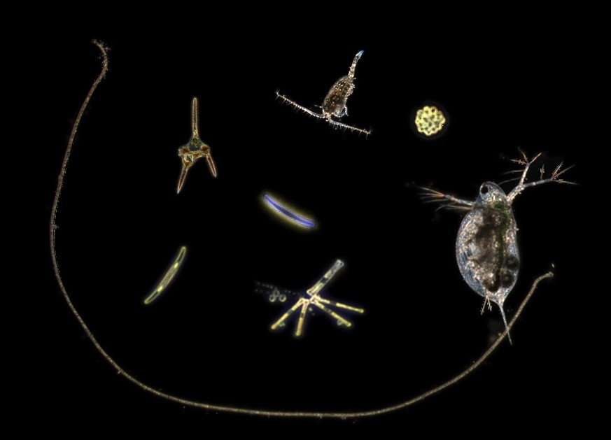 FlowCam for Marine & Freshwater Research | Phytoplankton
